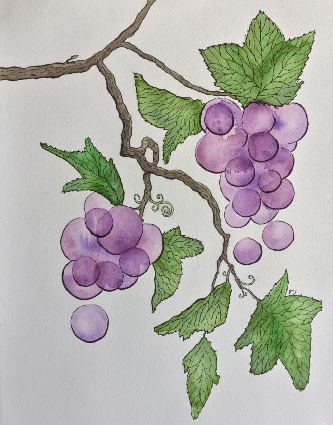 Old Vine.Hannah Singer.JPG